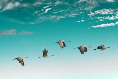 5 migrations cloud